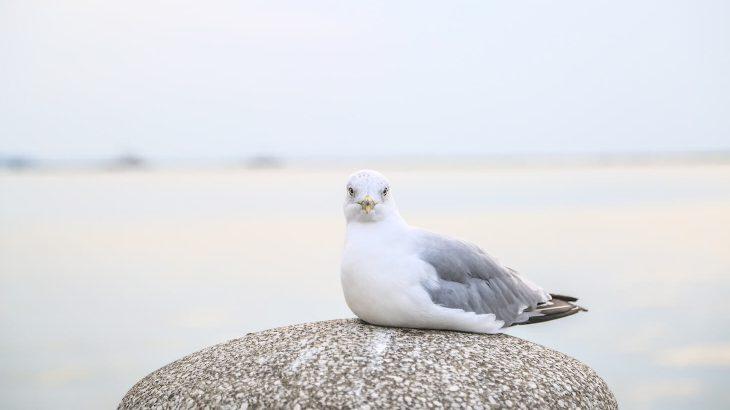 静岡が誇る探鳥スポット!浜松細江町の「細江湖(引佐細江)」
