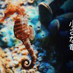 浜名湖に住む小さな竜「タツノオトシゴ」に会える、浜松市内の観察スポット
