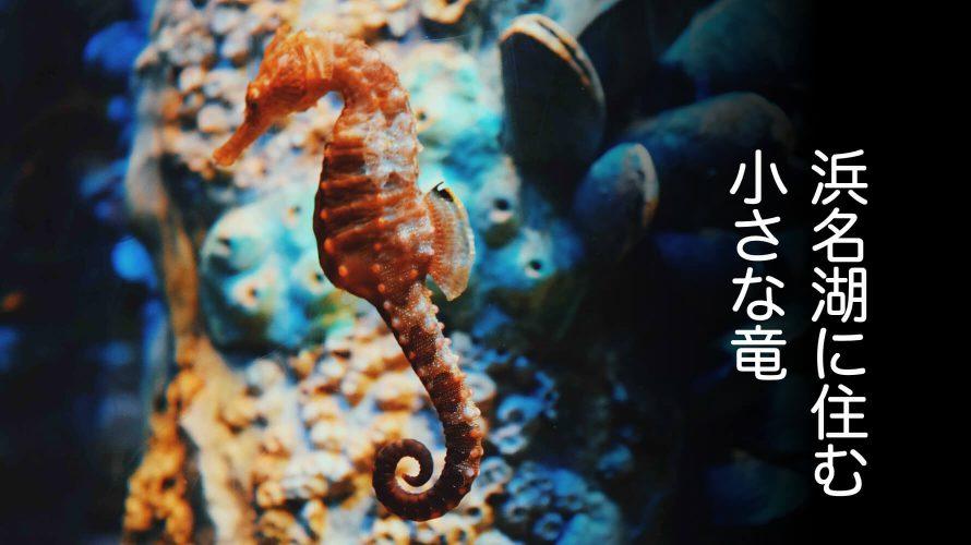タツノオトシゴの画像