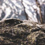 浜名湖唯一の無人島。ダイダラボッチが作った神域「礫島」