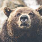 浜松で登山。熊に遭遇したらどうするの?