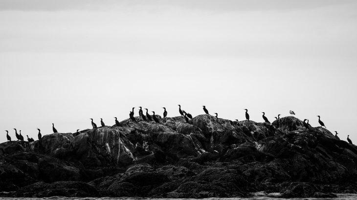 浜名湖バードウォッチング。弁天島の「黒い瀬」の正体に迫る