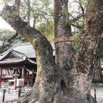 集え巨木・銘木好き!浜松のパワースポット「細江神社」