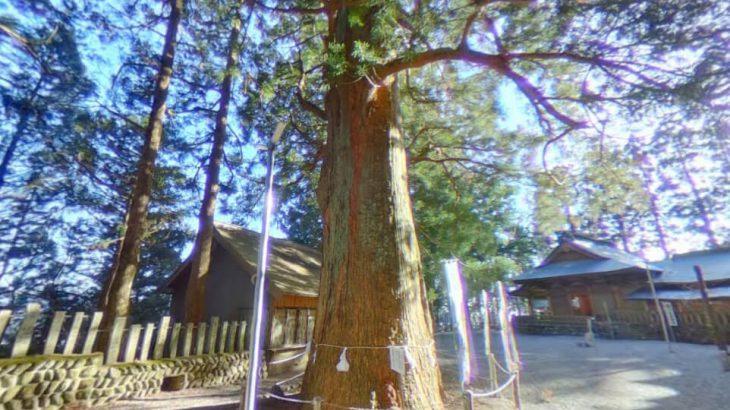 山住神社の大杉