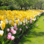 【浜松フォトジェニックスポット】桜が散っても美しい「はままつフラワーパーク」