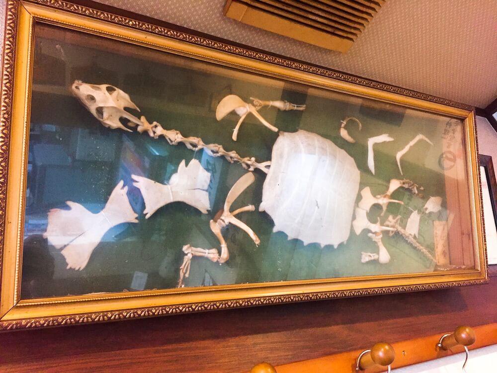 富久竹の画像