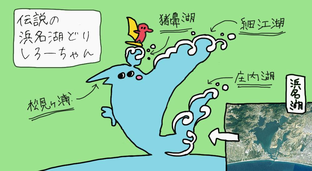 浜名湖どり「しろー」の画像